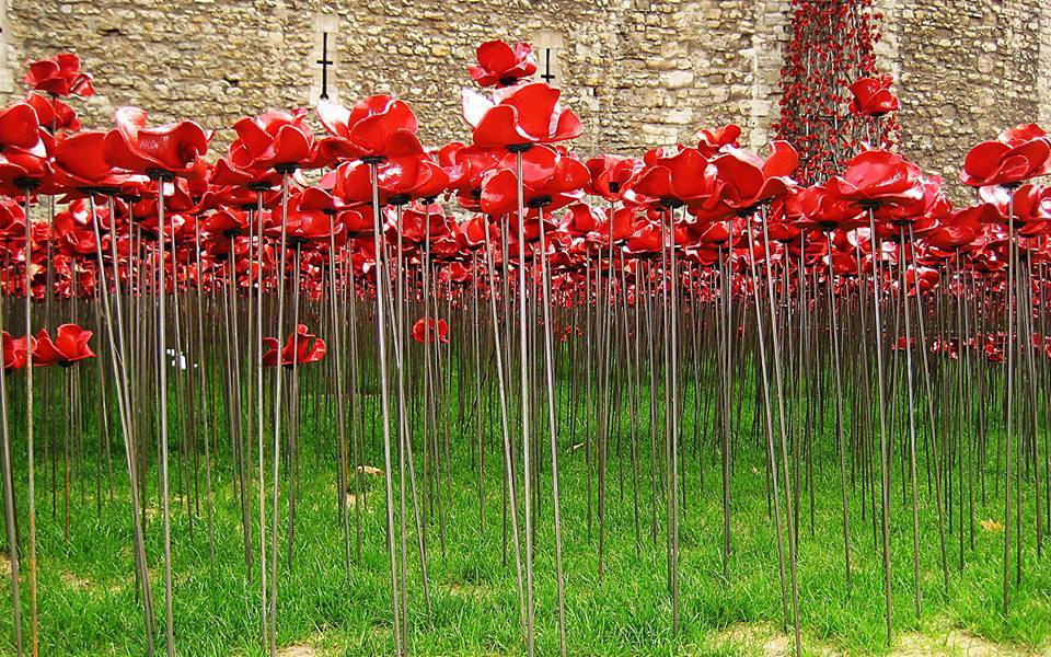 Hiral Patel/Tower Poppies Planters