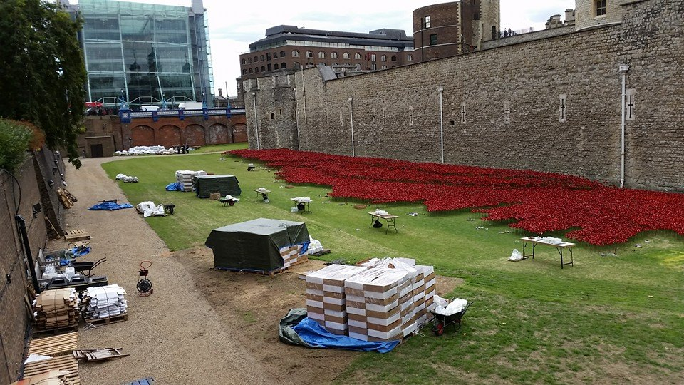 Tower Poppies Planters