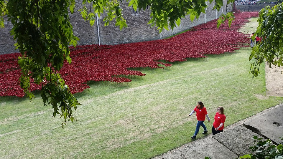 Tower Poppies Planters Facebook