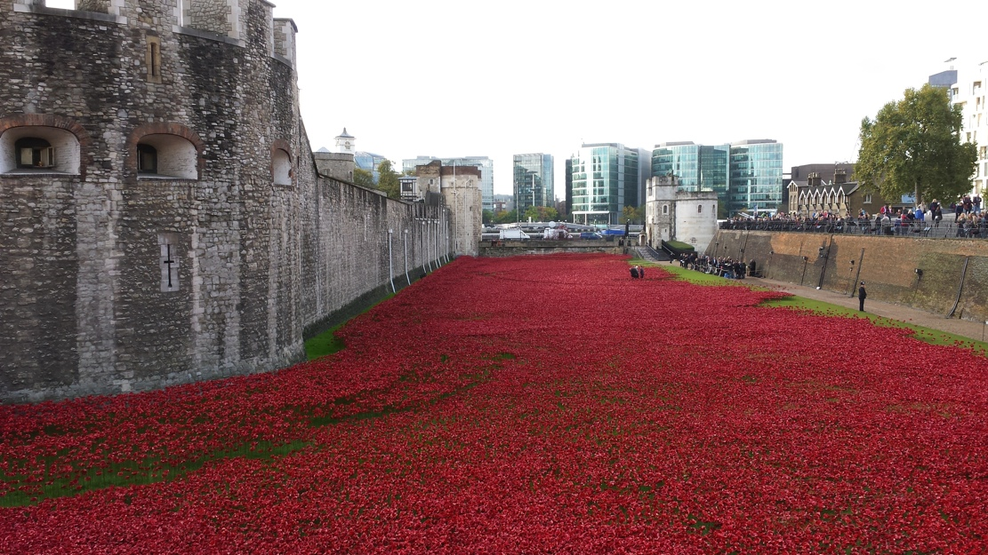 Tower Poppies Cascading Shot KVK Photo